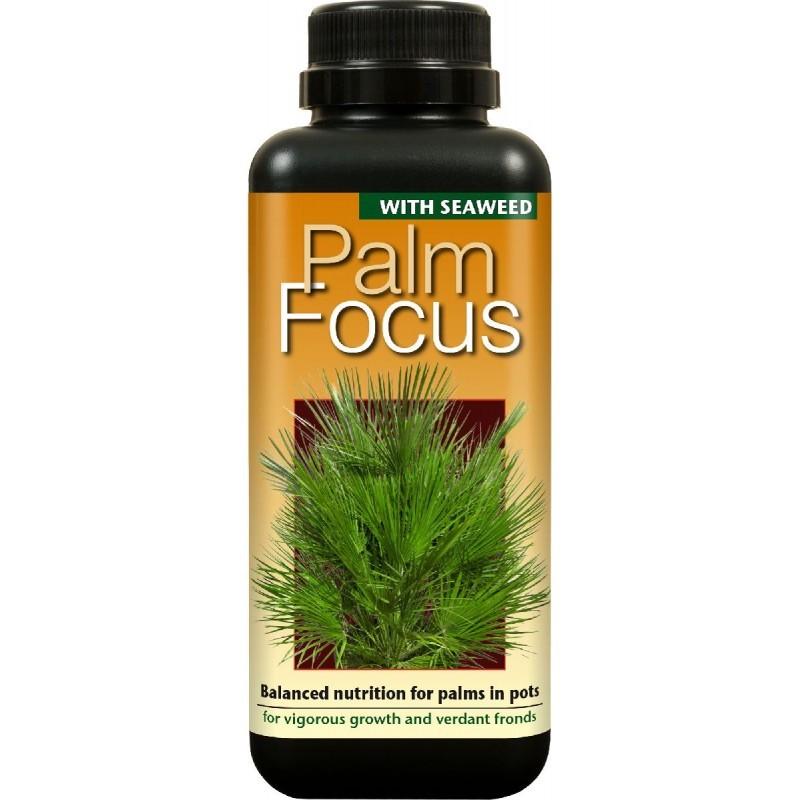 Palm Focus 100ml